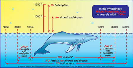 Image showing approach distances for whales.