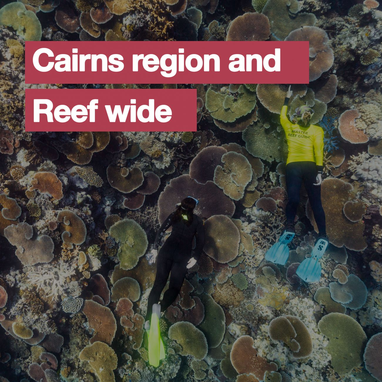 Cairns region and Reef wide