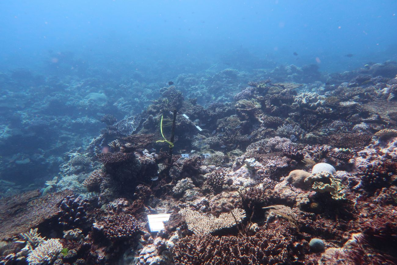 Thetford Reef near Cairns. Taken 2017 after bleaching, showing coral bleaching and mortality.