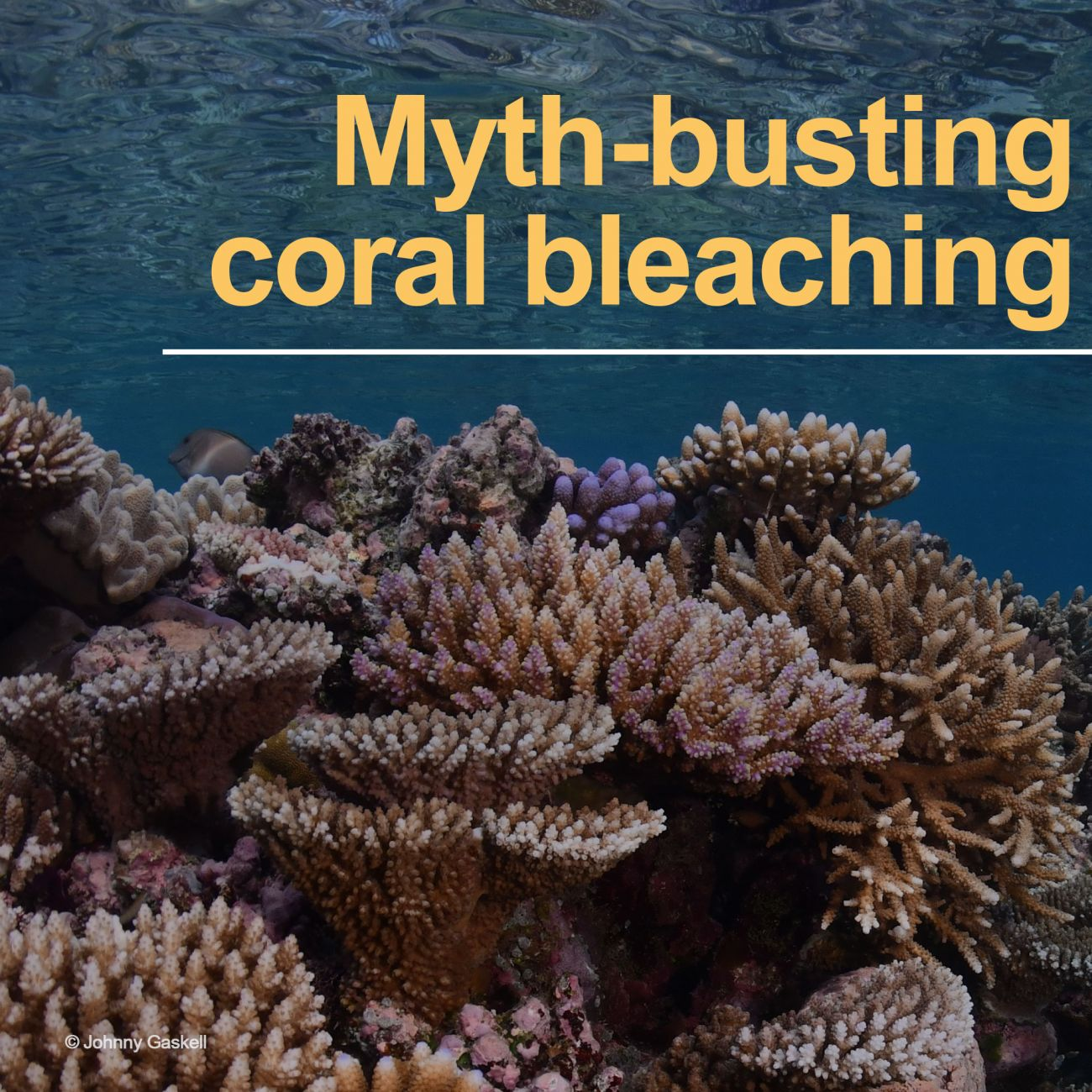 Fact or fiction: coral bleaching 101
