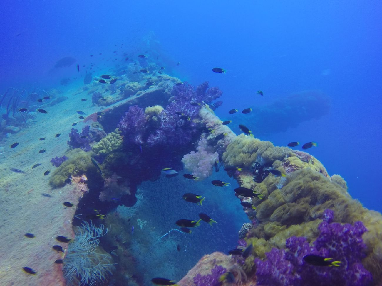 View of the SS Yongala wreck