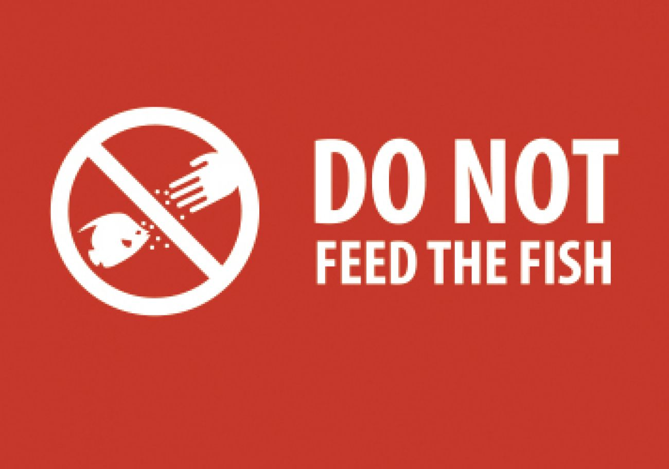 Do not feed the fish