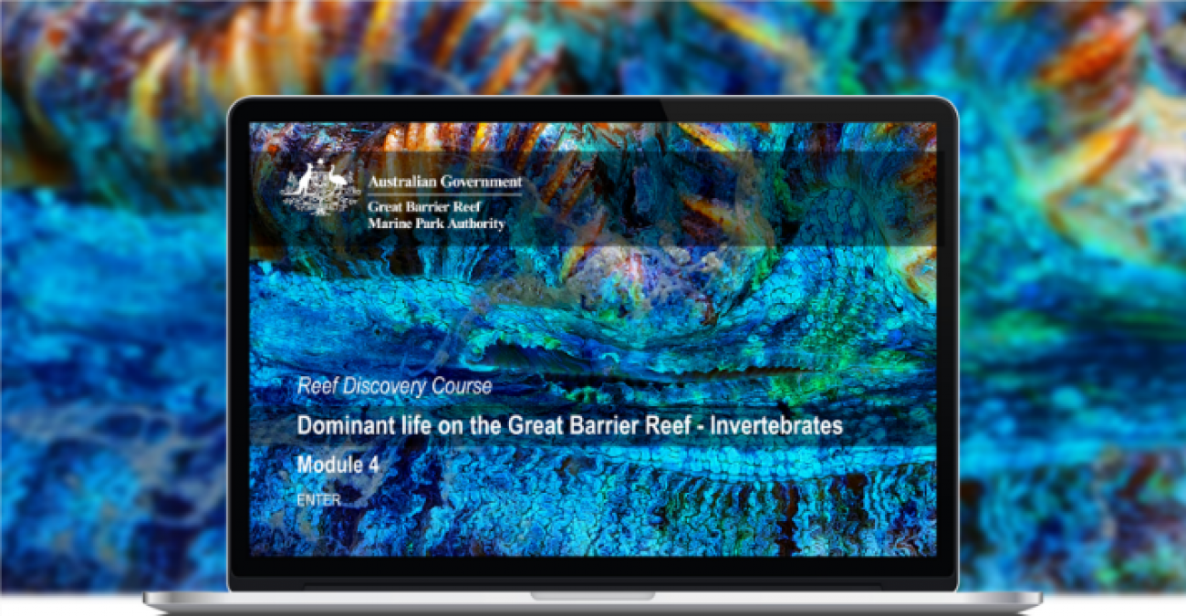 Reef Discovery Course