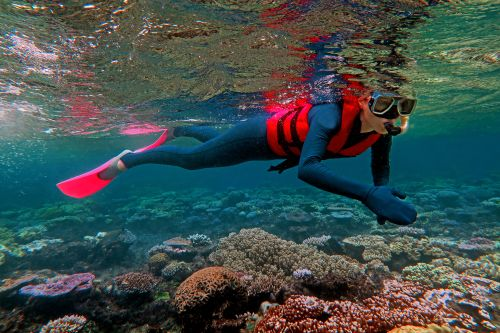 Image of woman snorkeling, Great Barrier Reef, QLD. Image credit Chameleons Eye