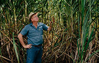 Cane farmer looking at his crop