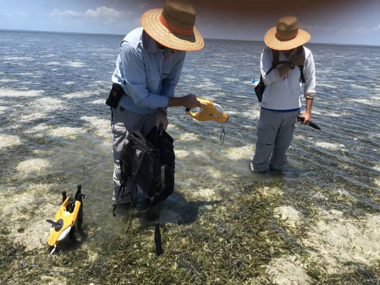 Marine Monitoring Program seagrass - image credit Carol Honchin