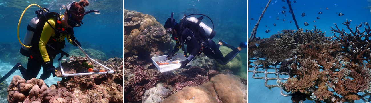 Coral Gardening with Wavelength Research Vessel